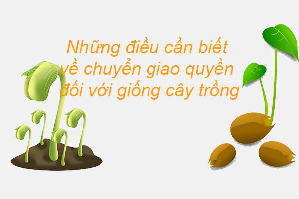 Nhung Dieu Can Biet Ve Chuyen Giao Quyen Doi Voi Giong Cay Trong